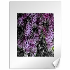 Lilacs Fade to Black and White Canvas 36  x 48  (Unframed)