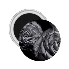 Black And White Tea Roses 2 25  Button Magnet