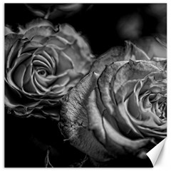 Black and White Tea Roses Canvas 20  x 20  (Unframed)