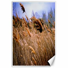 Blowing prairie Grass Canvas 24  x 36  (Unframed)