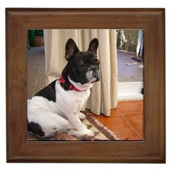 Sitting 3 French Bulldog Framed Ceramic Tile