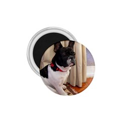 Sitting 3 French Bulldog 1.75  Button Magnet