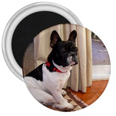 Sitting 3 French Bulldog 3  Button Magnet
