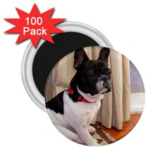 Sitting 3 French Bulldog 2.25  Button Magnet (100 pack)