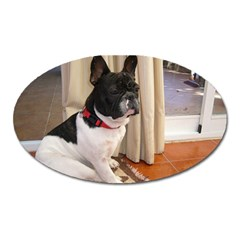 Sitting 3 French Bulldog Magnet (Oval)