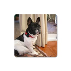 Sitting 3 French Bulldog Magnet (Square)
