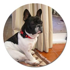 Sitting 3 French Bulldog Magnet 5  (Round)