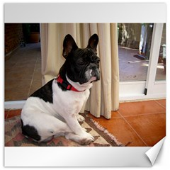 Sitting 3 French Bulldog Canvas 20  x 20  (Unframed)