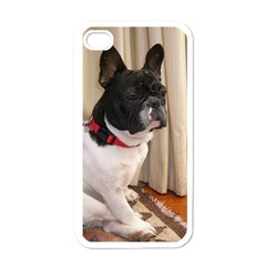 Sitting 3 French Bulldog Apple iPhone 4 Case (White)
