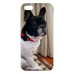 Sitting 3 French Bulldog iPhone 5S Premium Hardshell Case