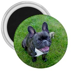 Sitting 2 French Bulldog 3  Button Magnet