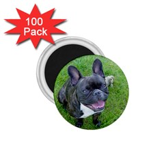 Sitting 2 French Bulldog 1.75  Button Magnet (100 pack)