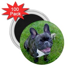 Sitting 2 French Bulldog 2.25  Button Magnet (100 pack)