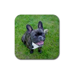 Sitting 2 French Bulldog Drink Coaster (Square)