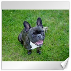 Sitting 2 French Bulldog Canvas 20  x 20  (Unframed)