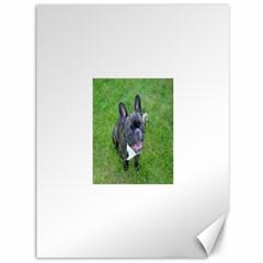 Sitting 2 French Bulldog Canvas 36  x 48  (Unframed)