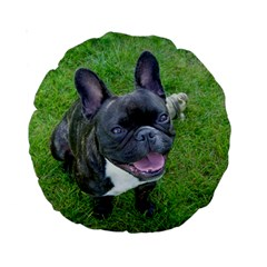 Sitting 2 French Bulldog Standard 15  Premium Round Cushion