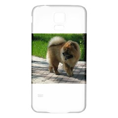 Chow Chow Full Samsung Galaxy S5 Back Case (White)