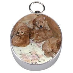Apricot Poodle Pups Silver Compass