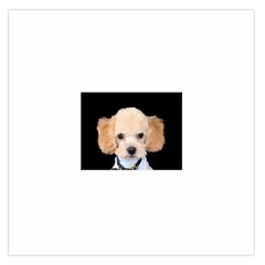 Apricot Poodle Satin Scarf (Square)