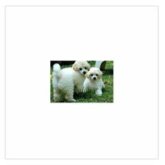 White 2 Poodle Pups Satin Scarf (square)