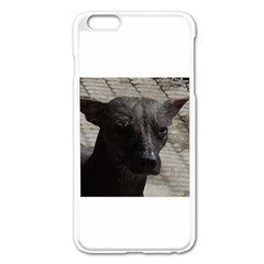 mexican hairless / Xoloitzcuintle Apple iPhone 6 Plus Enamel White Case