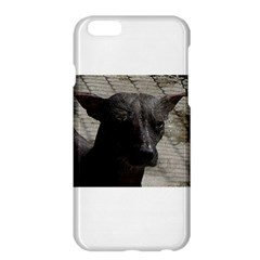 mexican hairless / Xoloitzcuintle Apple iPhone 6 Plus Hardshell Case