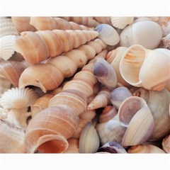 Seashells 3000 4000 Canvas 16  x 20  (Unframed)