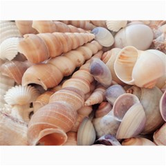Seashells 3000 4000 Canvas 18  x 24  (Unframed)