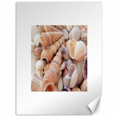 Seashells 3000 4000 Canvas 36  X 48  (unframed)