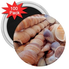 Sea Shells 3  Button Magnet (100 pack)