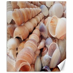 Sea Shells Canvas 8  x 10  (Unframed)