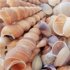 Sea Shells Canvas 20  x 20  (Unframed)