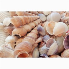 Sea Shells Canvas 20  x 30  (Unframed)