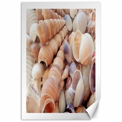 Sea Shells Canvas 24  x 36  (Unframed)