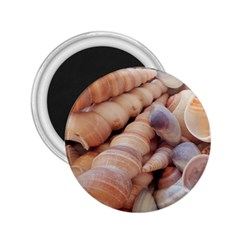 Sea Shells 2 25  Button Magnet