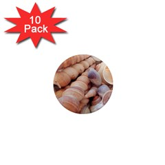 Sea Shells 1  Mini Button Magnet (10 Pack)