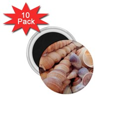 Sea Shells 1 75  Button Magnet (10 Pack)