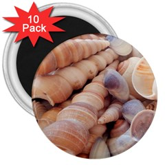 Sea Shells 3  Button Magnet (10 pack)