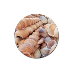 Sea Shells Magnet 3  (round)