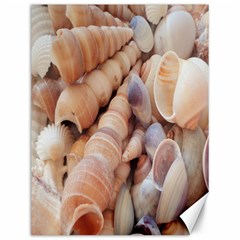Sea Shells Canvas 12  X 16  (unframed)