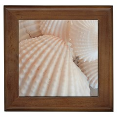 Sunny White Seashells Framed Ceramic Tile