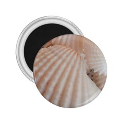 Sunny White Seashells 2 25  Button Magnet