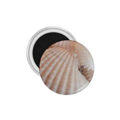 Sunny White Seashells 1.75  Button Magnet