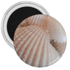 Sunny White Seashells 3  Button Magnet