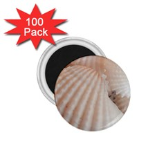 Sunny White Seashells 1.75  Button Magnet (100 pack)
