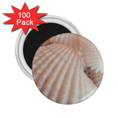Sunny White Seashells 2 25  Button Magnet (100 Pack)