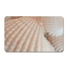 Sunny White Seashells Magnet (Rectangular)