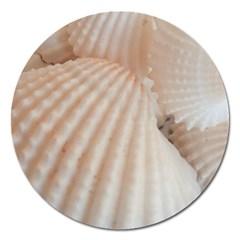 Sunny White Seashells Magnet 5  (Round)