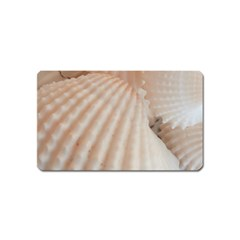 Sunny White Seashells Magnet (Name Card)